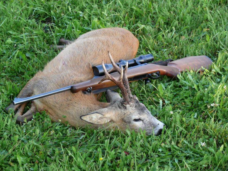 В Якутии браконьер за убийство двух косуль заплатит 320 тысяч рублей