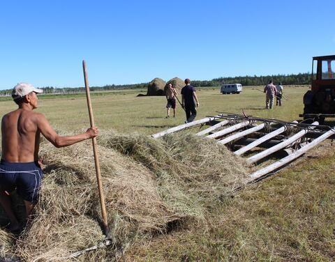 Кормозаготовительная кампания идет в 17 районах Якутии