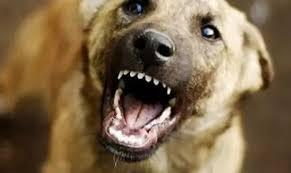 Следком начал проверку по информации о нападении собак на малолетнего ребенка в Якутске