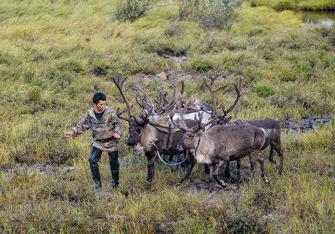 В Якутии молодые оленеводы будут получать 1 миллион рублей на улучшение жилищных условий