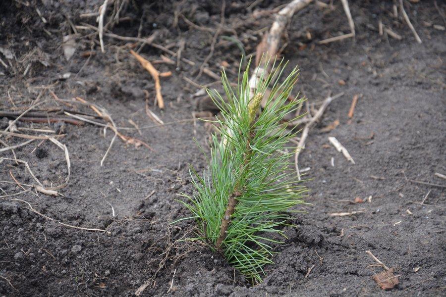 Студенты и сотрудники АГАТУ поедут на лесовосстановительные работы