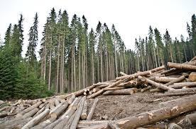 Дистанционный мониторинг. Нелегальную вырубку леса будут выявлять автоматически