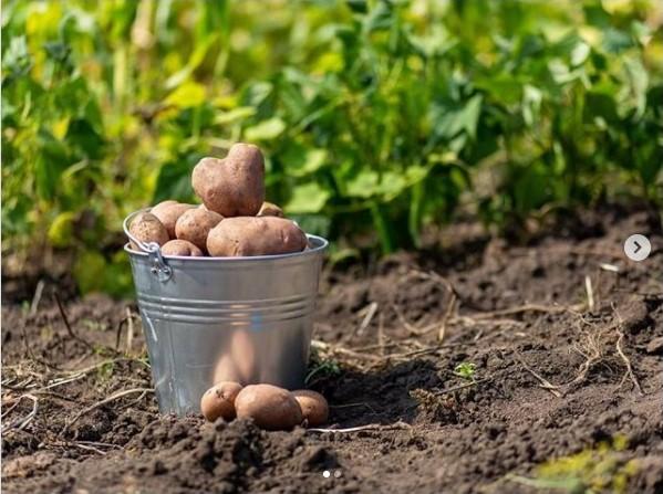 Минсельхоз Якутии: Основная задача — увеличить посевные площади картофеля и овощей в хозяйствах