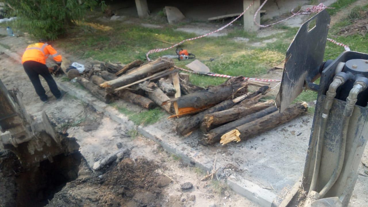 Более 400 пней выкорчевали из-под тротуаров и во дворах в Якутске