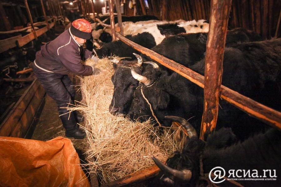 На поддержку сельского хозяйства Якутии в 2021 году направят 9,8 млрд рублей