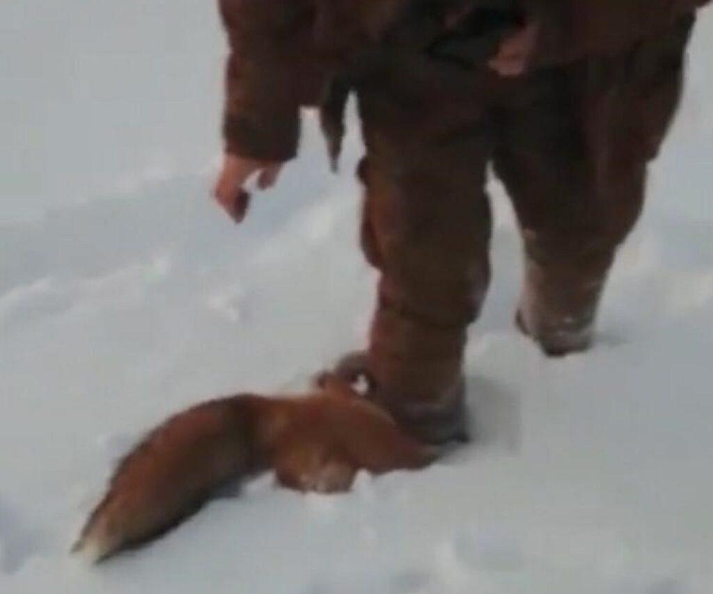 Якутская полиция разыскивает мужчин, жестоко убивших лису