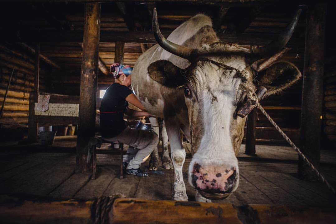 Минсельхоз Якутии: Личные подсобные хозяйства за полученную субсидию отчетность не предоставляют!