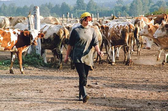 Российским фермерам хотят разрешить продажу сельхозтоваров на своей земле