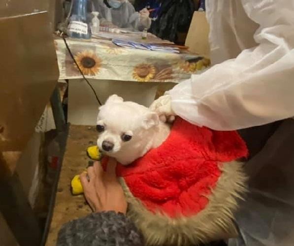 В Якутске проходит бесплатная вакцинация кошек и собак