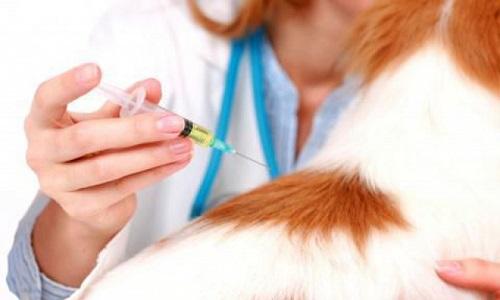 Бесплатное вакцинирование от бешенства пройдет в Якутске 27 марта и 3 апреля
