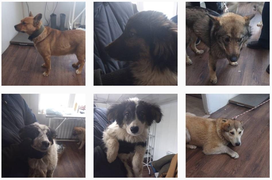 В Пункте передержки безнадзорных животных г. Якутска содержится 218 собак