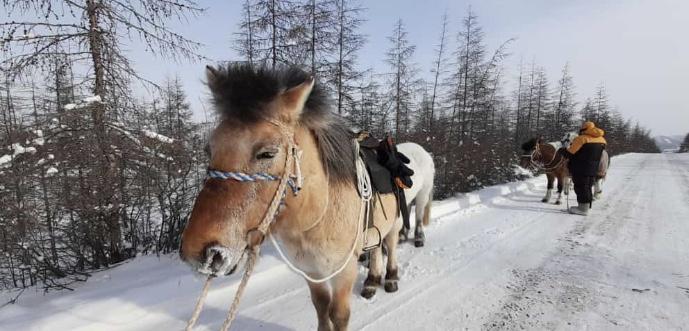 Не сигналить следующим в Лондон всадникам попросили водителей в Якутии