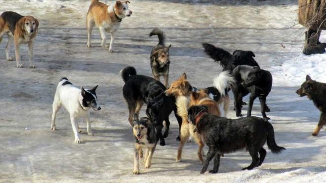 В Якутске обсудили создание филиала Пункта передержки безнадзорных животных