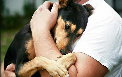 В Якутске создадут Общественный совет по ответственному обращению с животными