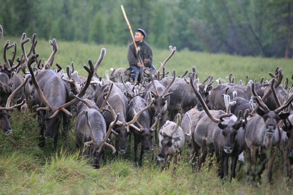 В Якутии направят 11,7 млн рублей на трудоустройство детей в оленеводческие хозяйства