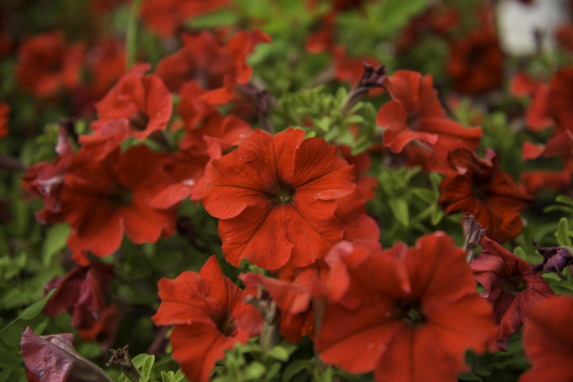В теплице АГАТУ реализуется цветочная и овощная рассады