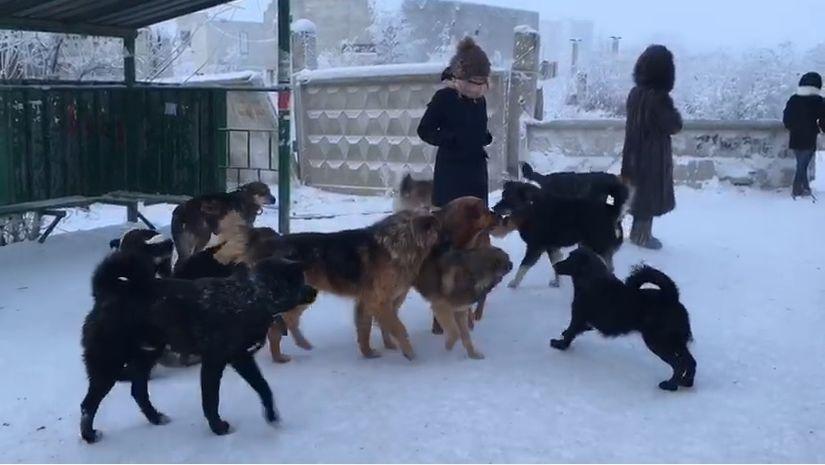 Депутаты Гордумы рассмотрели программу жителя Якутска по бродячим собакам