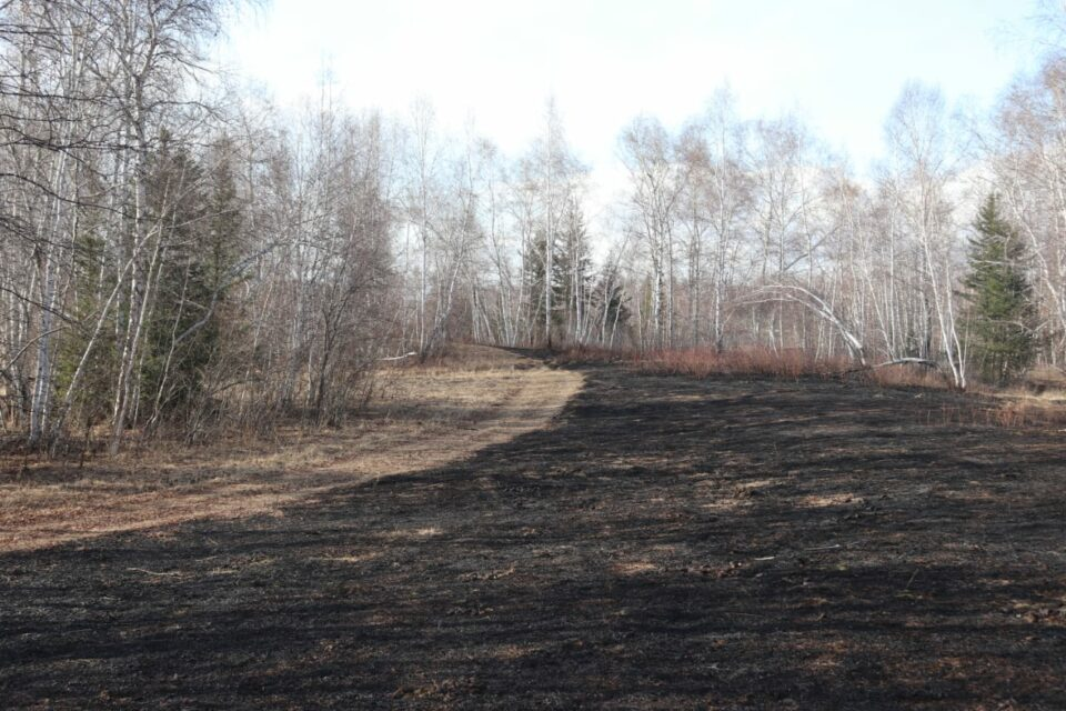 Четыре лесных пожара действуют в Якутии