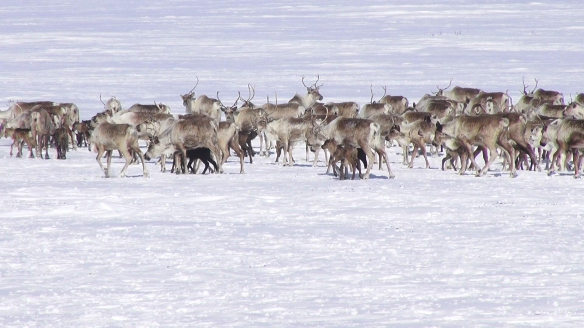 «Четыре наслега Усть-Янского улуса выступили против объединения муниципалитетов»