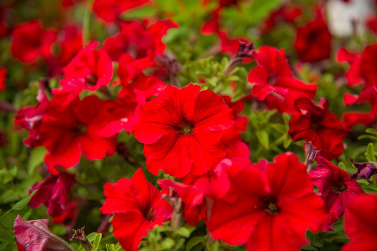 ФИНАЛЬНАЯ РАСПРОДАЖА цветочной и овощной рассады