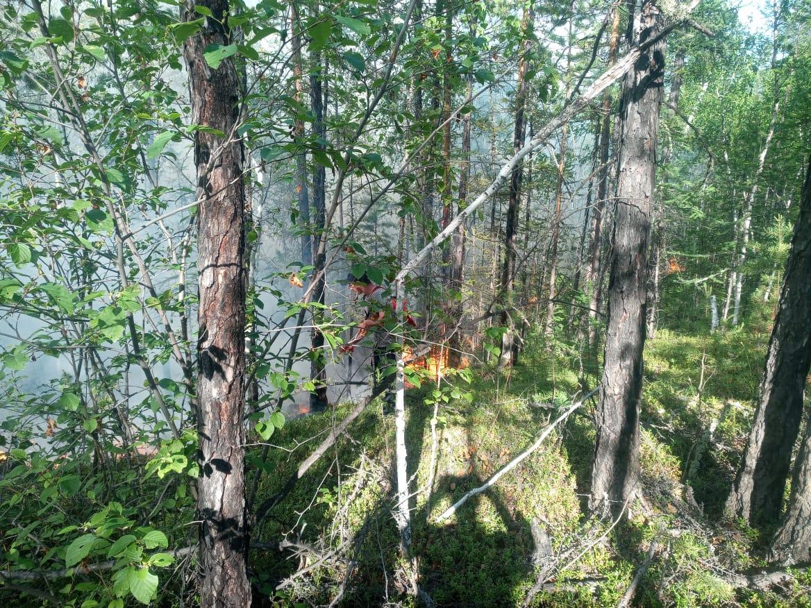 В пригороде Якутска локализованы природные пожары