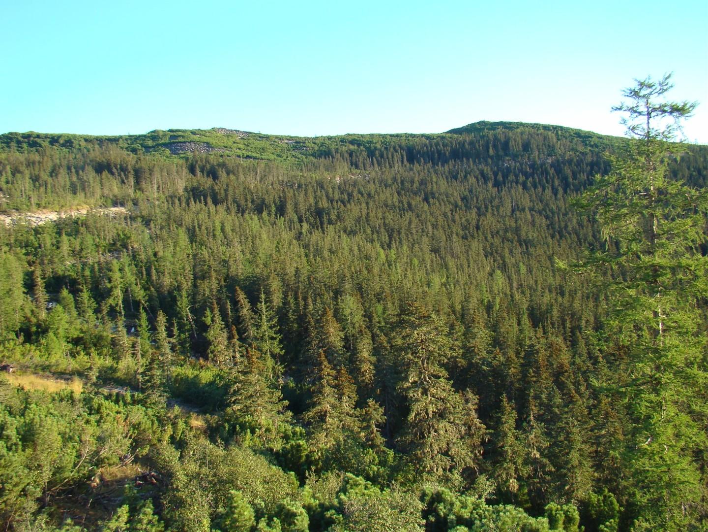 АГАТУ реализует проекты по лесовосстановлению
