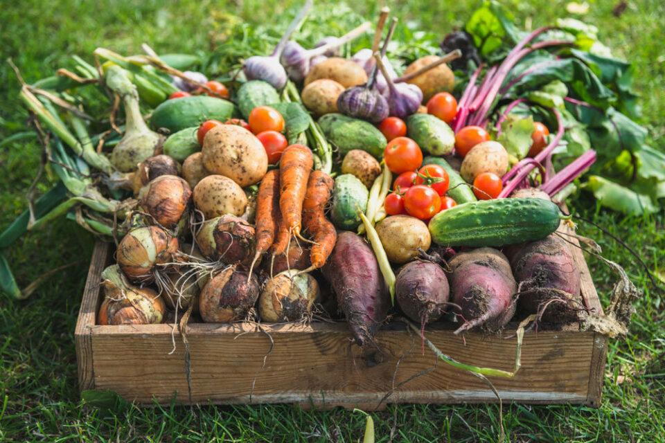 Якутским фермерам могут разрешить продавать продукты на своих участках