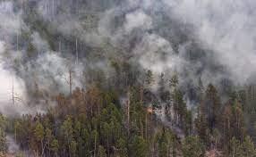 25 виновных в возникновении лесных пожаров выявили в Якутии