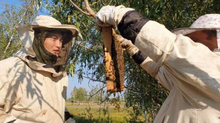 Студент АГАТУ Денис Иванов развивает пчеловодство в Амгинском улусе