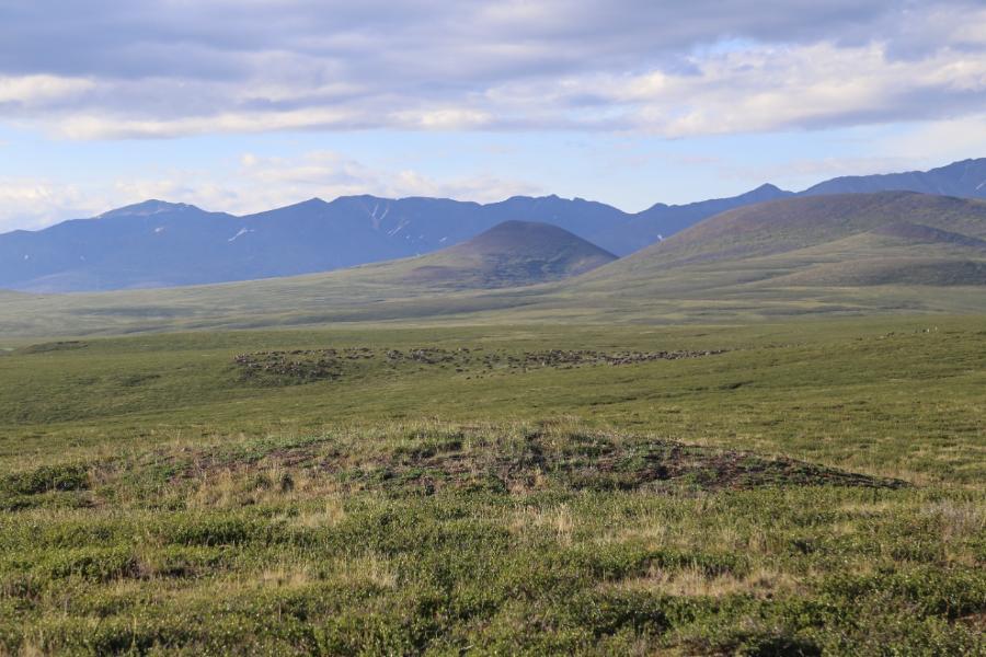 Ученые СВФУ исследуют уникальную местность в Арктике