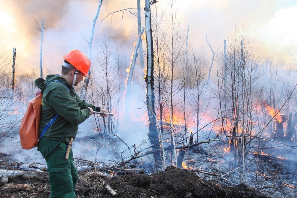 Владимир Путин утвердил ряд поручений, направленных на борьбу с лесными пожарами