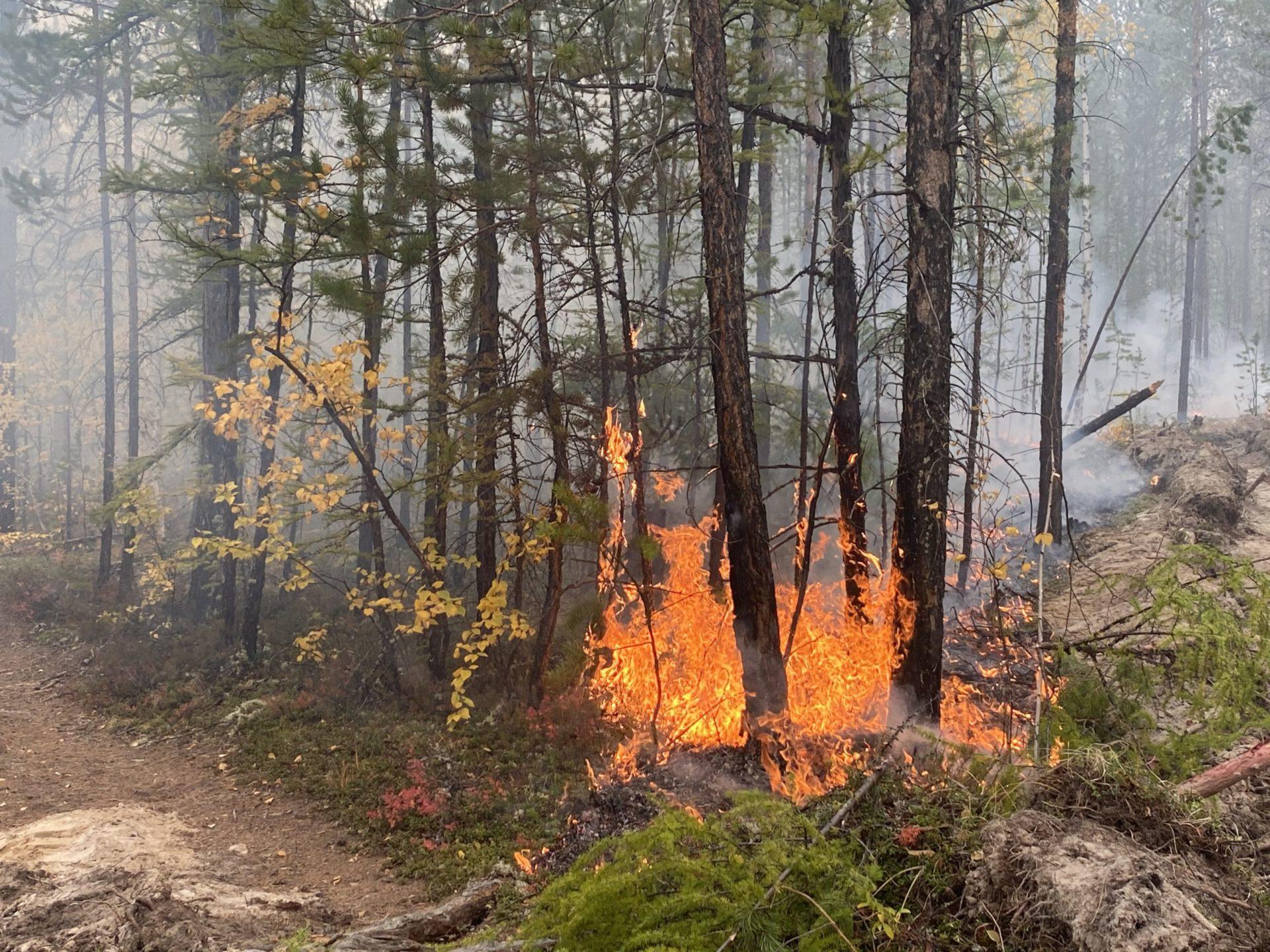 В Якутске локализован лесной пожар по Вилюйскому тракту