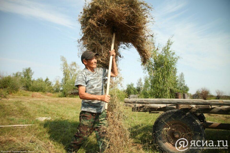 В Якутии 233 мобильные бригады должны заготовить на отдаленных сенокосных угодьях 39 тысяч тонн сена
