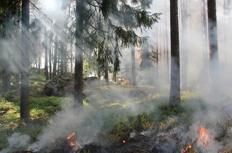 Минприроды предложило методику расчёта ущерба от лесных пожаров