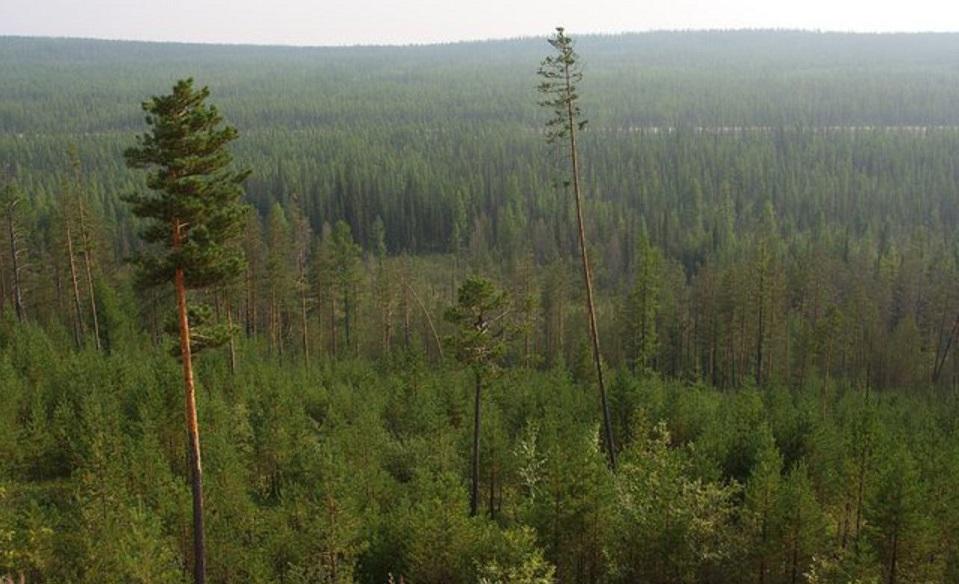 Минэкономразвития РФ подготовило проект национальной климатической стратегии