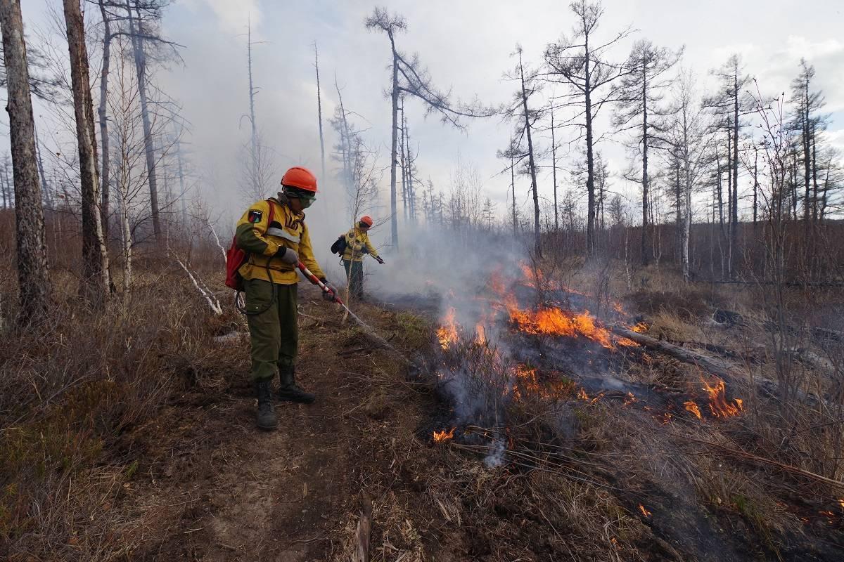 Общественники заступились за лесников, которых привлекли к ответственности «за недостаточно эффективную борьбу с лесными пожарами»