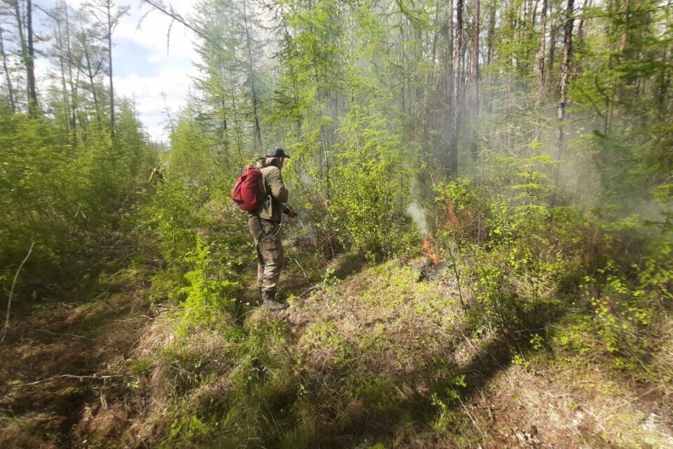За последние сутки в Якутии ликвидировано четыре лесных пожара