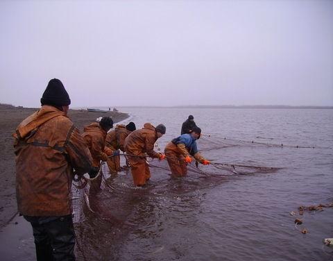 Елена Голомарева приняла участие в заседании рабочей комиссии по рыболовству