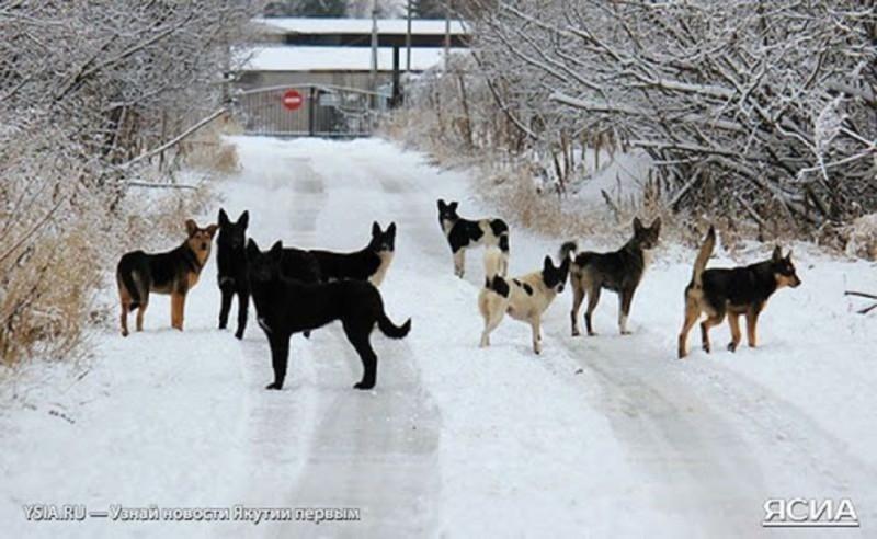 Евгений Григорьев поручил усилить отлов собак перед проведением переписи населения