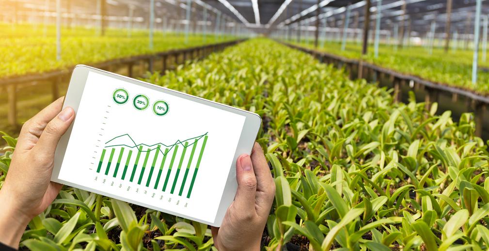 «Золотая осень»: нейросети и роботы повысят урожайность теплиц и садов на 20-30% — Россельхозбанк