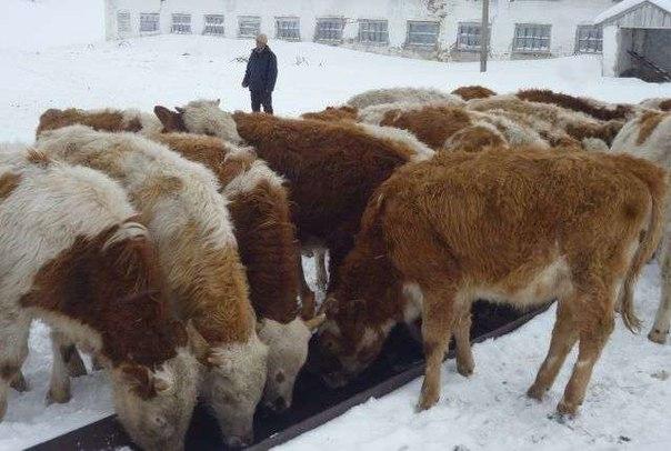 Очередной факт растраты денег под видом строительства коровника выявили в Якутии