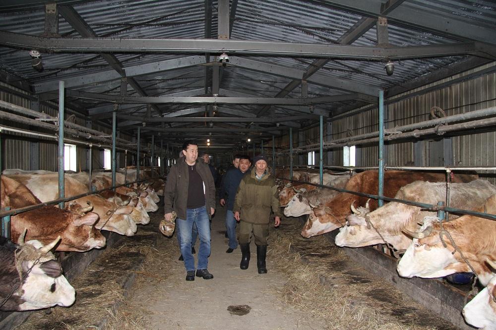 Зампред правительства Петр АЛЕКСЕЕВ инспектирует объекты животноводческого хозяйства Якутии