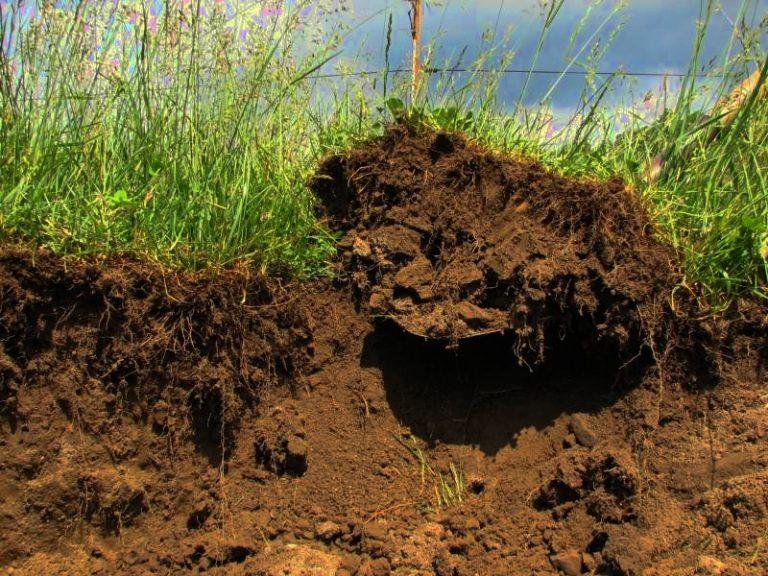 На птицефабрике незаконно сняли плодородный слой почвы