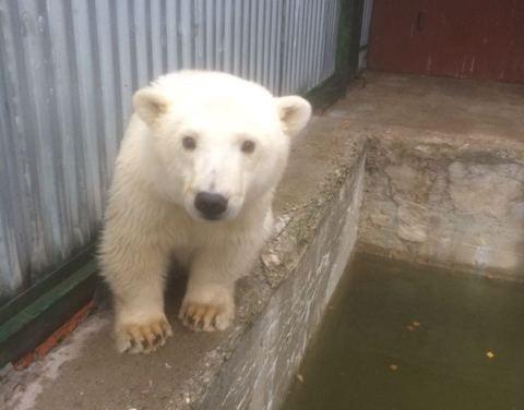 Среднеколымский медвежонок успешно заселился в Московском зоопарке