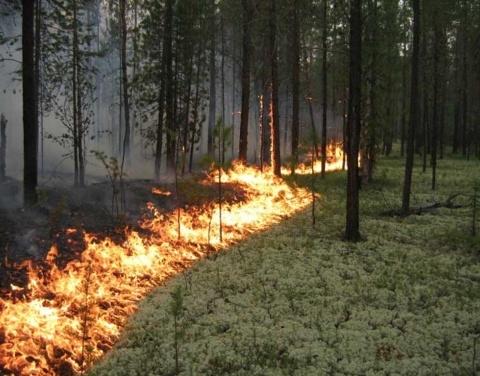 Площадь лесных пожаров в Якутии почти в 14 раз меньше, чем в прошлом году