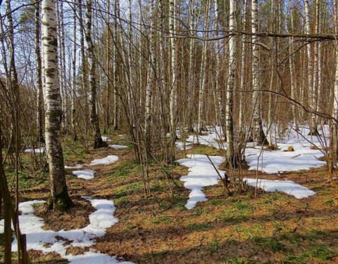 В Якутии действующие лесные пожары отсутствуют