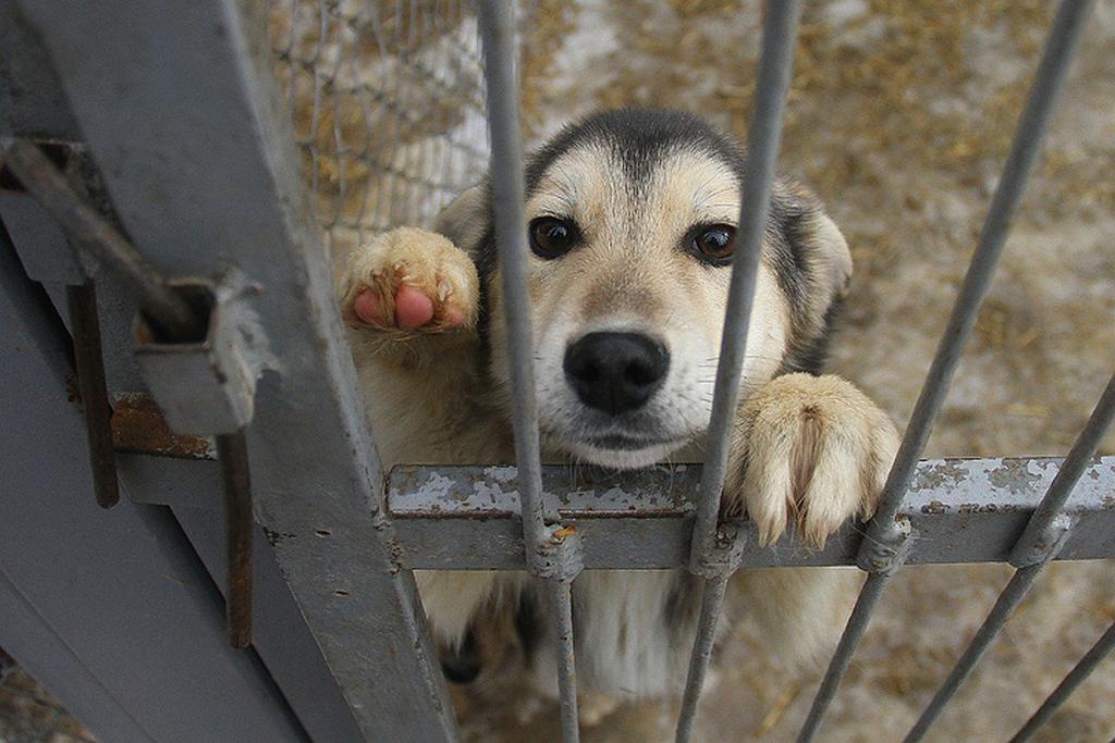 Власти Якутска намерены через суд добиться надлежащего обеспечения исполнения федерального законодательства об ответственном обращении с безнадзорными животными