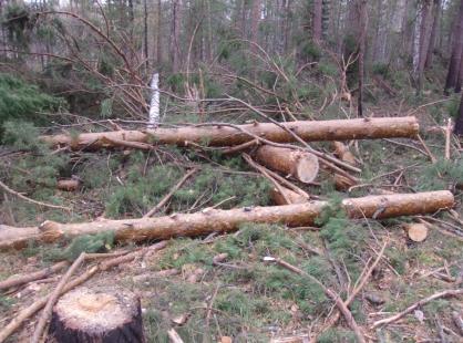 Депутат из Нюрбинского района ответит в суде за незаконную вырубку лесных насаждений