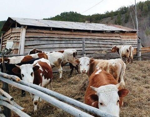 В республике мероприятия по отгону скота и лошадей проводятся своевременно