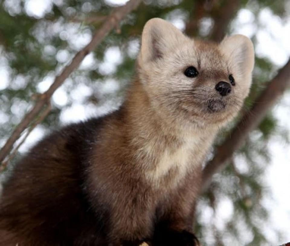 В Якутии продолжается прием заявок на добычу лимитируемых охотничьих ресурсов
